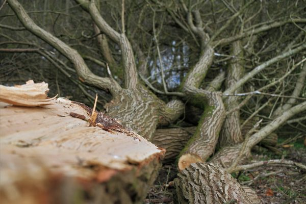 Arborists – What They Are And Situations They Are Fully Trained For