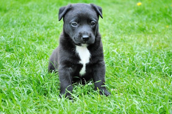 Owning a Dog – Why It's Highly Recommended and Well Worth It